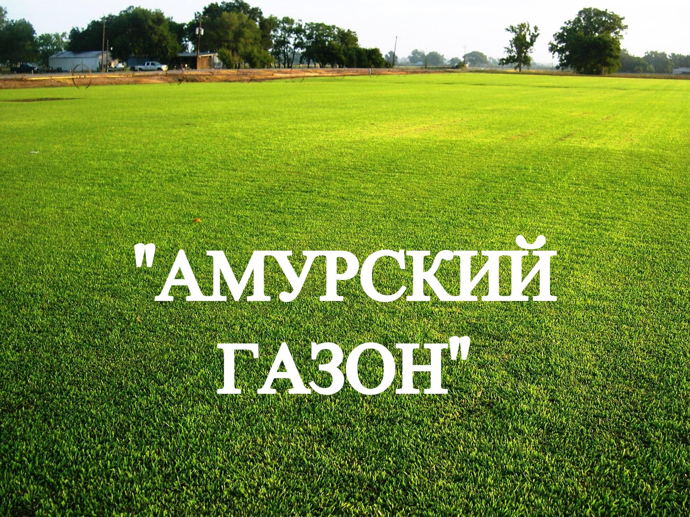 многолетняя газонная трава семена