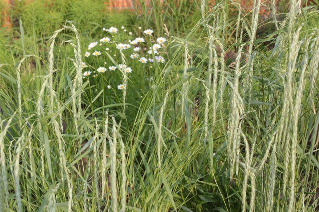 семена растений оптом от производителя