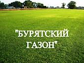 """Газонная трава, травосмесь """"Бурятский газон"""""""