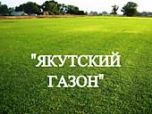 """Газонная трава, травосмесь """"Якутский газон"""""""